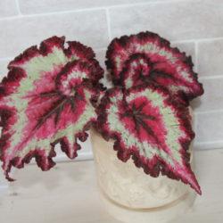 B.Strawberry